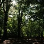 Sonne im schattigen Wald