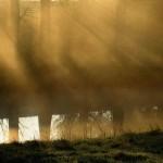 Morgennebel im Licht