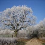 Frost bei schönem Wetter