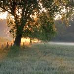 Nebel über den Wiesen
