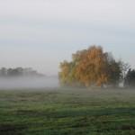 Nebel zieht über den Wiesen