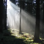 Lichtstrahl im dunklen Wald