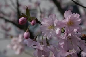Knospen und Blüten II