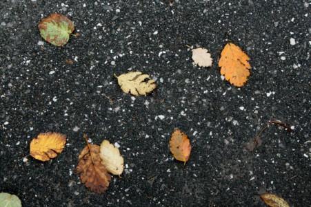 lose Blätter