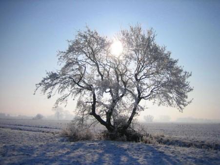 Baum mit Wintersonne