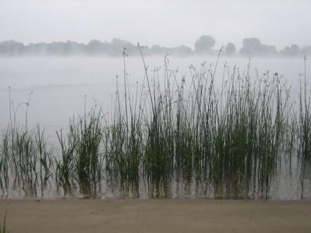 Nebel an der Elbe 8