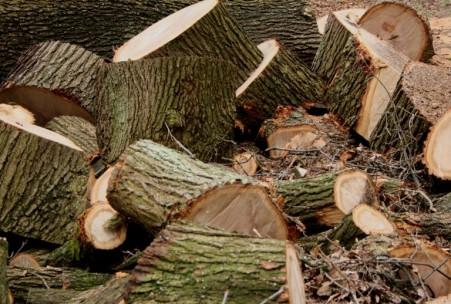 Holzklötze 3