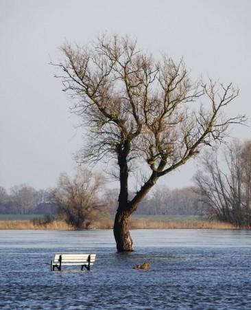 Bank und Baum